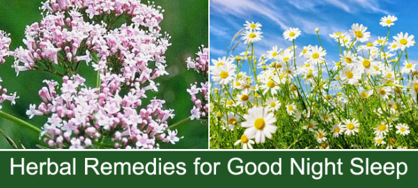 Herbal Sleep Remedies for a Good Night Sleep