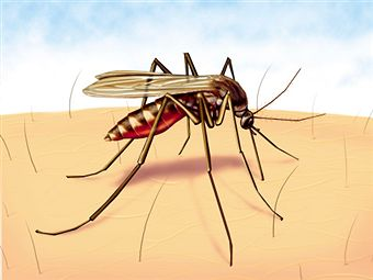 Malaria: Causes, Symptoms and Prevention